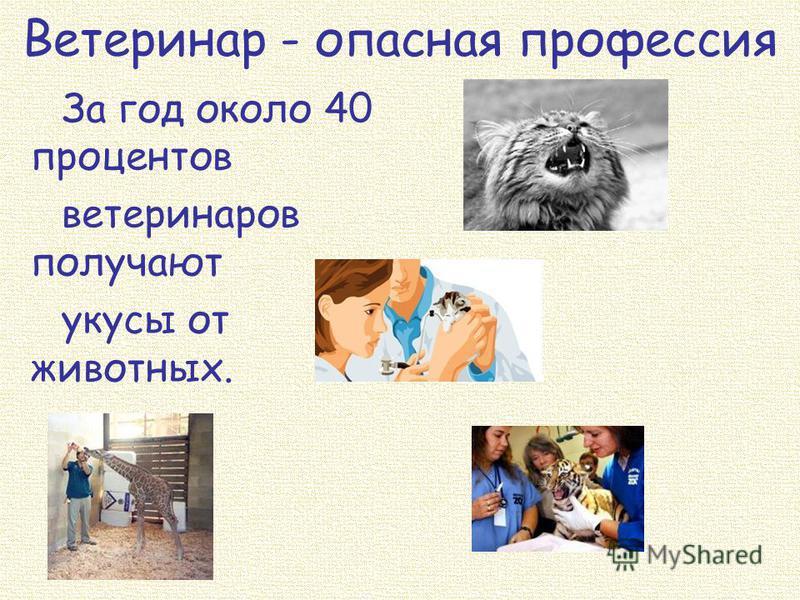Ветеринар - опасная профессия За год около 40 процентов ветеринаров получают укусы от животных.