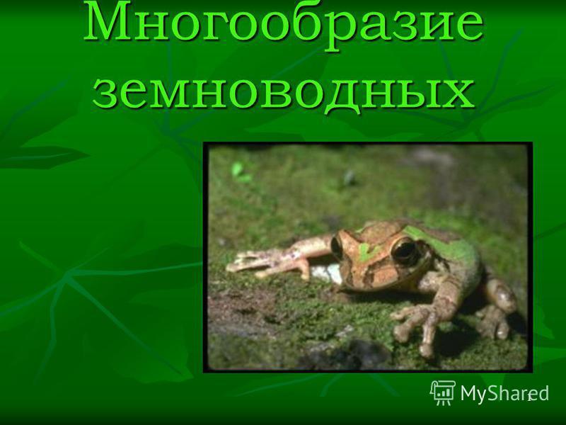 1 Многообразие земноводных