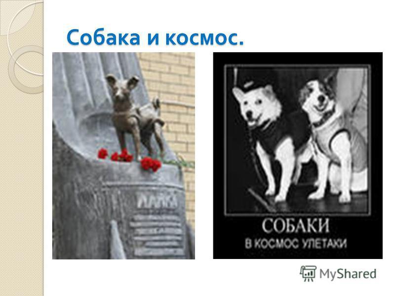 Собака и космос.