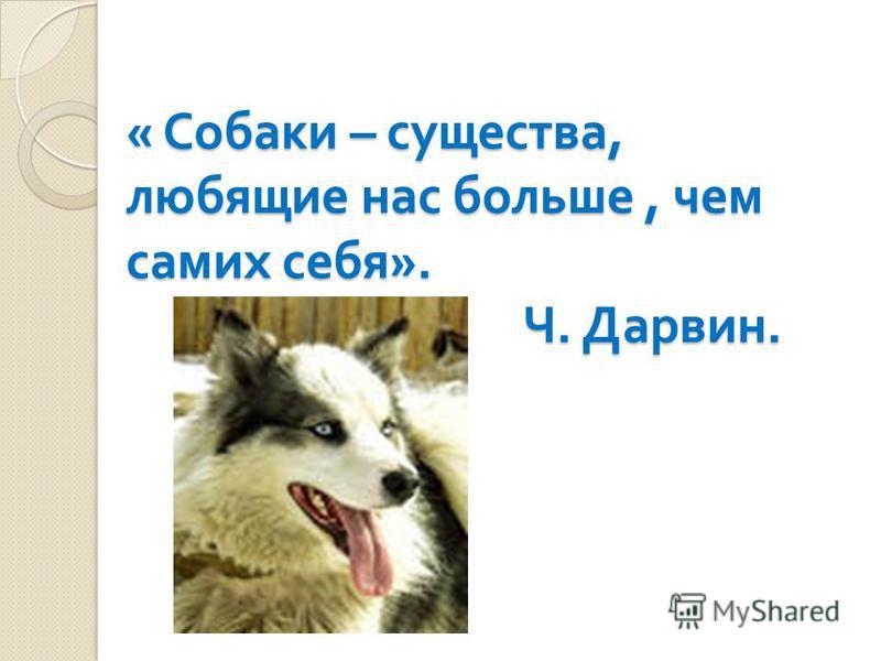 « Собаки – существа, любящие нас больше, чем самих себя ». Ч. Дарвин.