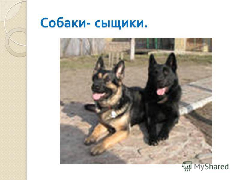 Собаки - сыщики.