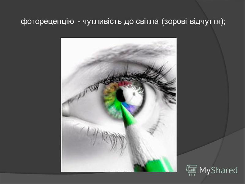 фоторецепцію - чутливість до світла (зорові відчуття);