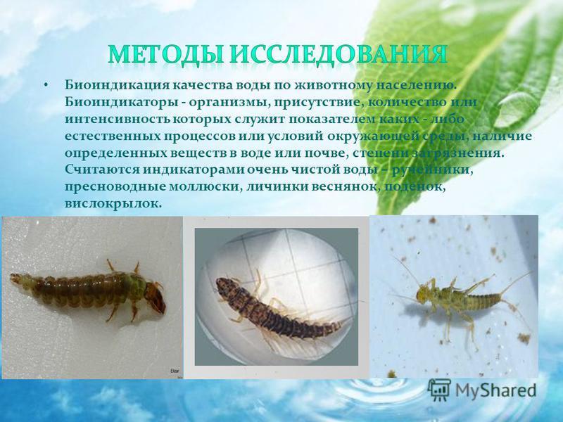 Биоиндикация качества воды по животному населению. Биоиндикаторы - организмы, присутствие, количество или интенсивность которых служит показателем каких - либо естественных процессов или условий окружающей среды, наличие определенных веществ в воде и