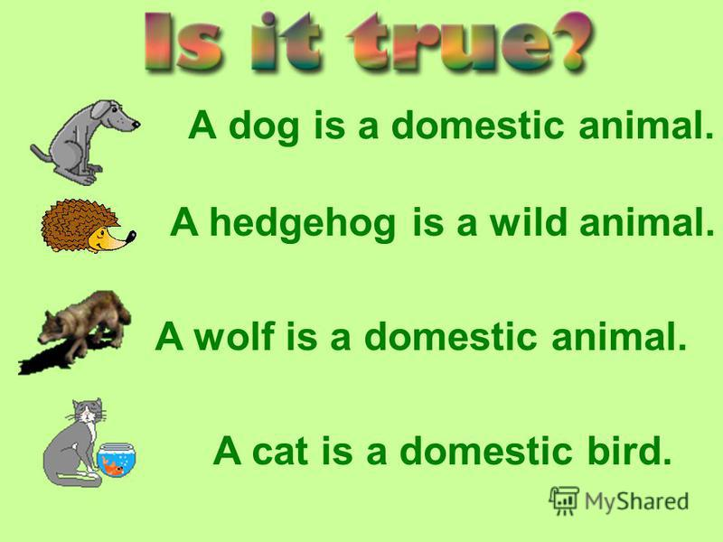 A dog is a domestic animal. A hedgehog is a wild animal. A wolf is a domestic animal. A cat is a domestic bird.