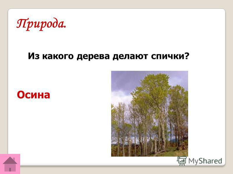 Природа. Осина Из какого дерева делают спички?