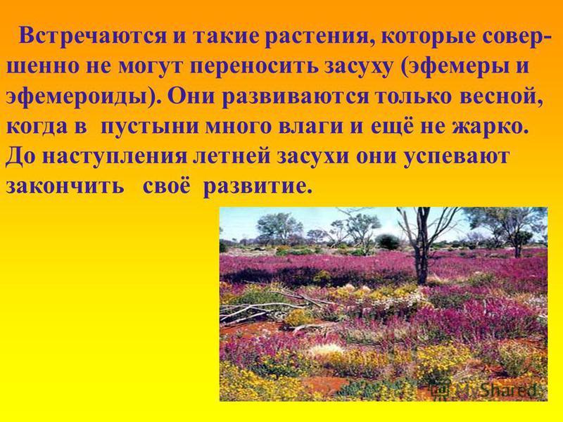 Встречаются и такие растения, которые совершенно не могут переносить засуху (эфемеры и эфемероиды). Они развиваются только весной, когда в пустыни много влаги и ещё не жарко. До наступления летней засухи они успевают закончить своё развитие.