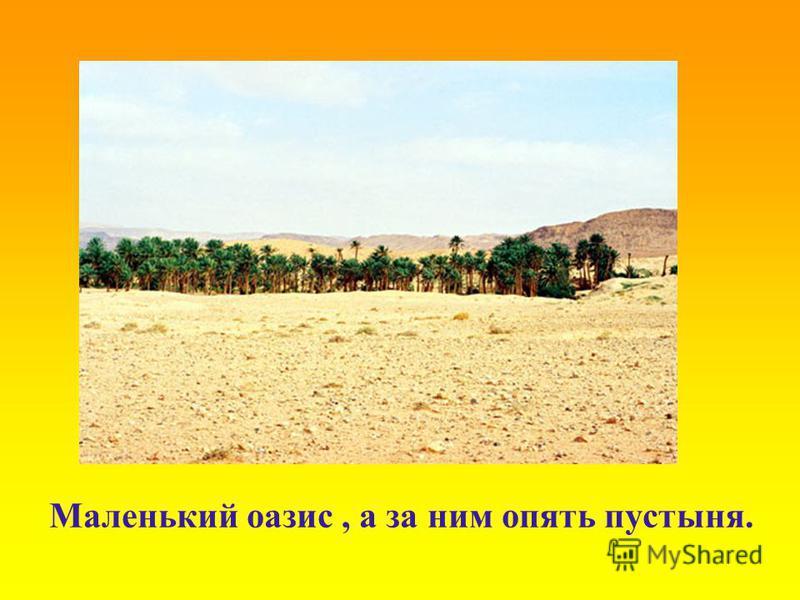 Маленький оазис, а за ним опять пустыня.