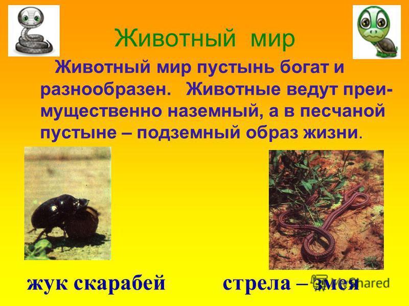 Животный мир Животный мир пустынь богат и разнообразен. Животные ведут преимущественно наземный, а в песчаной пустыне – подземный образ жизни. жук скарабей стрела – змея