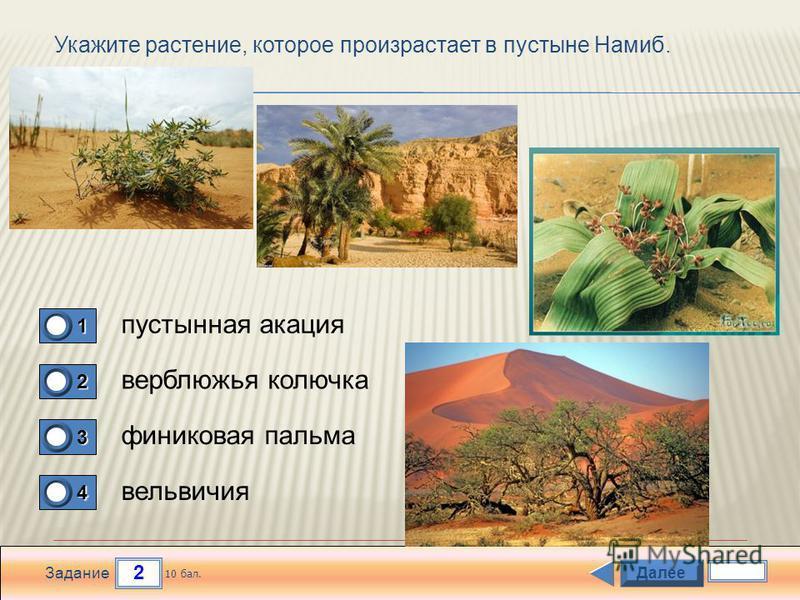 2 Задание Укажите растение, которое произрастает в пустыне Намиб. пустынная акация верблюжья колючка финиковая пальма вельвичия 1 0 2 0 3 0 4 1 Далее 10 бал.