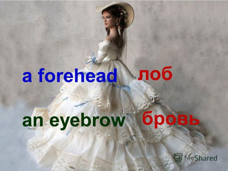a forehead лоб an eyebrow бровь