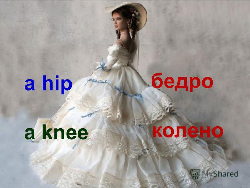 a hip бедро a knee колено
