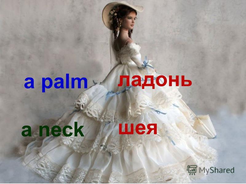 a palm ладонь a neck шея