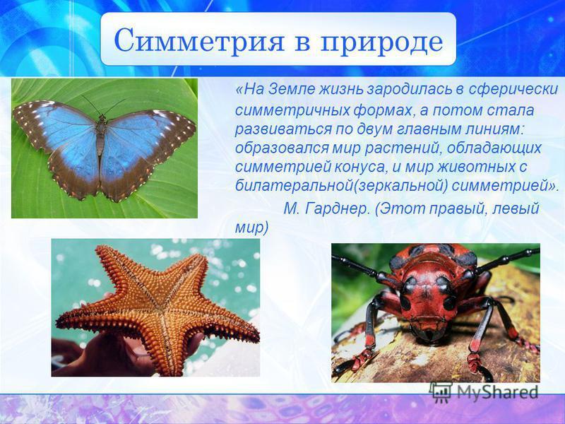Симметрия в природе «На Земле жизнь зародилась в сферически симметричных формах, а потом стала развиваться по двум главным линиям: образовался мир растений, обладающих симметрией конуса, и мир животных с билатеральной(зеркальной) симметрией». М. Гард