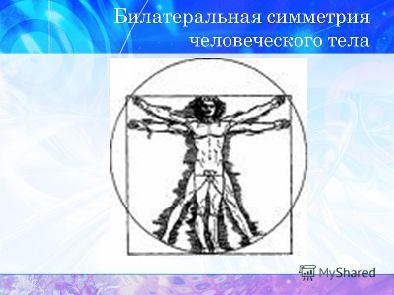 Билатеральная симметрия человеческого тела