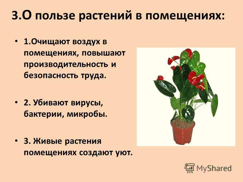 3. О пользе растений в помещениях: 1. Очищают воздух в помещениях, повышают производительность и безопасность труда. 2. Убивают вирусы, бактерии, микробы. 3. Живые растения помещениях создают уют.