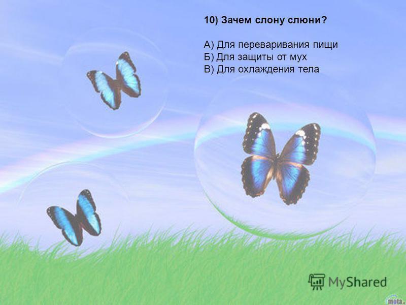 10) Зачем слону слюни? А) Для переваривания пищи Б) Для защиты от мух В) Для охлаждения тела