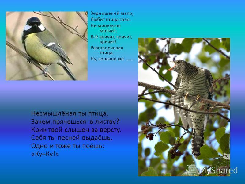 Несмышлёная ты птица, Зачем прячешься в листву? Крик твой слышен за версту. Себя ты песней выдаёшь, Одно и тоже ты поёшь: «Ку–Ку!» Зернышек ей мало, Любит птица сало. Ни минуты не молчит, Всё кричит, кричит, кричит! Разговорчивая птица, Ну, конечно ж