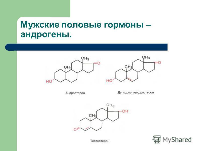 Мужские половые гормоны – андрогены.