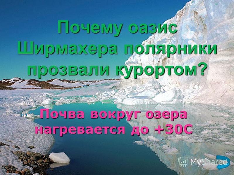 Почему оазис Ширмахера полярники прозвали курортом? Почва вокруг озера нагревается до +30С