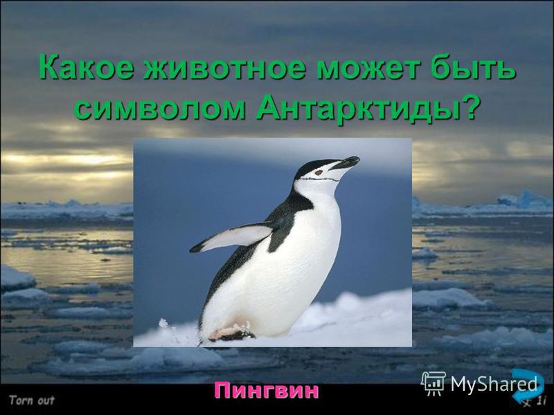 Какое животное может быть символом Антарктиды? Пингвин