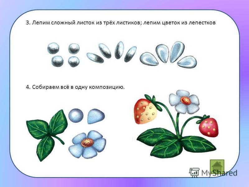 3. Лепим сложный листок из трёх листиков; лепим цветок из лепестков 4. Собираем всё в одну композицию.