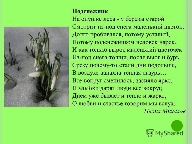 Подснежник На опушке леса - у березы старой Смотрит из-под снега маленький цветок, Долго пробивался, потому усталый, Потому подснежником человек нарек. И как только вырос маленький цветочек Из-под снега толщи, после вьюг и бурь, Срезу почему-то стали