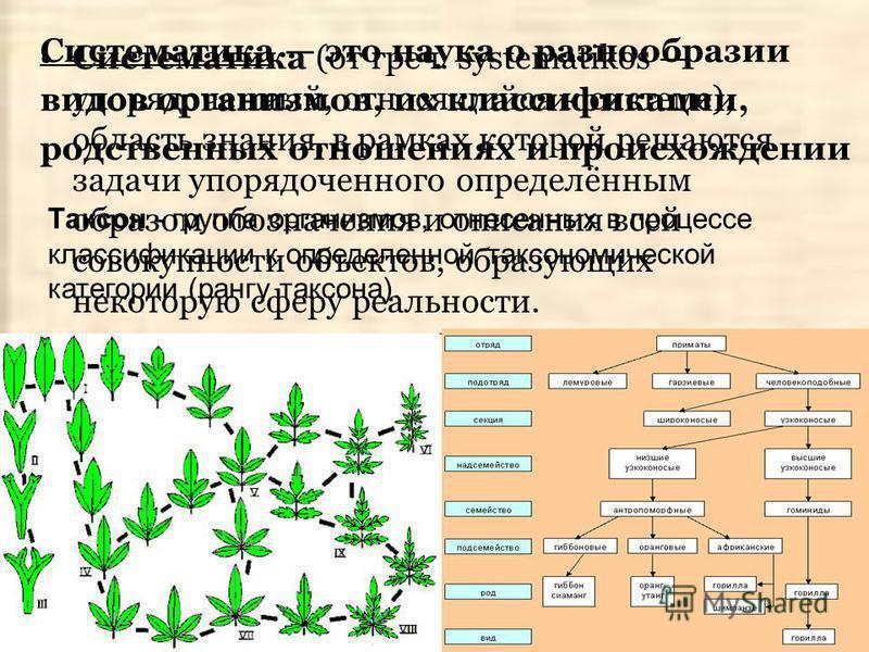 Систематика (от греч. systematikos упорядоченный, относящийся к системе), область знания, в рамках которой решаются задачи упорядоченного определённым образом обозначения и описания всей совокупности объектов, образующих некоторую сферу реальности. С
