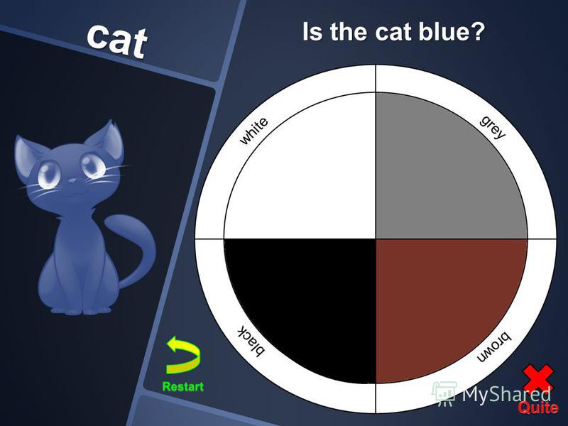 cat Is the cat blue?
