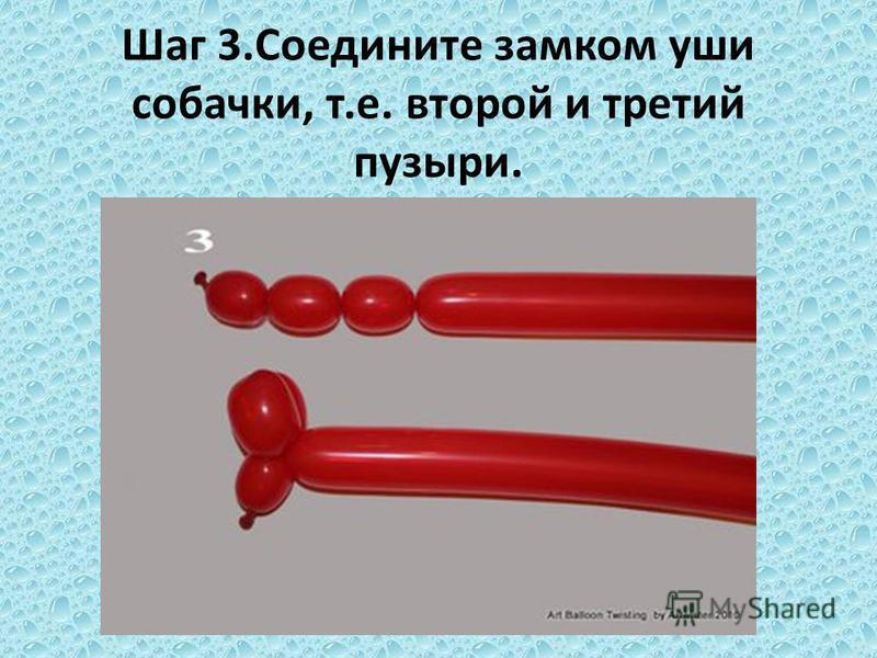 Шаг 3. Соедините замком уши собачки, т.е. второй и третий пузыри.