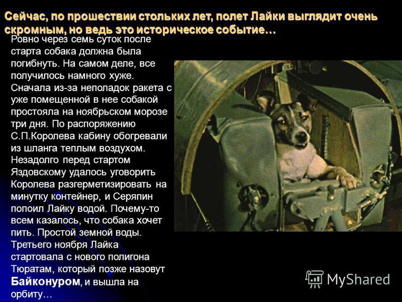 Сейчас, по прошествии стольких лет, полет Лайки выглядит очень скромным, но ведь это историческое событие… Ровно через семь суток после старта собака должна была погибнуть. На самом деле, все получилось намного хуже. Сначала из-за неполадок ракета с