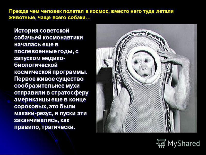 Прежде чем человек полетел в космос, вместо него туда летали животные, чаще всего собаки… История советской собачьей космонавтики началась еще в послевоенные годы, с запуском медико- биологической космической программы. Первое живое существо сообрази