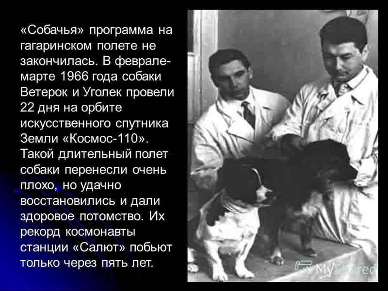«Собачья» программа на гагаринском полете не закончилась. В феврале- марте 1966 года собаки Ветерок и Уголек провели 22 дня на орбите искусственного спутника Земли «Космос-110». Такой длительный полет собаки перенесли очень плохо, но удачно восстанов