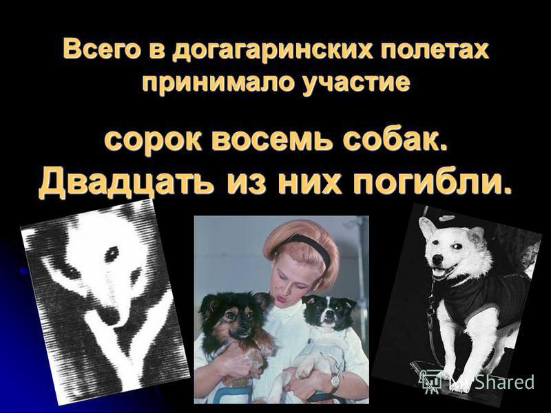Всего в догагаринских полетах принимало участие сорок восемь собак. Двадцать из них погибли.