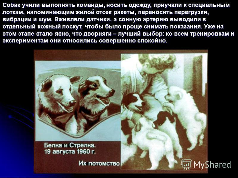 Собак учили выполнять команды, носить одежду, приучали к специальным лоткам, напоминающим жилой отсек ракеты, переносить перегрузки, вибрации и шум. Вживляли датчики, а сонную артерию выводили в отдельный кожный лоскут, чтобы было проще снимать показ