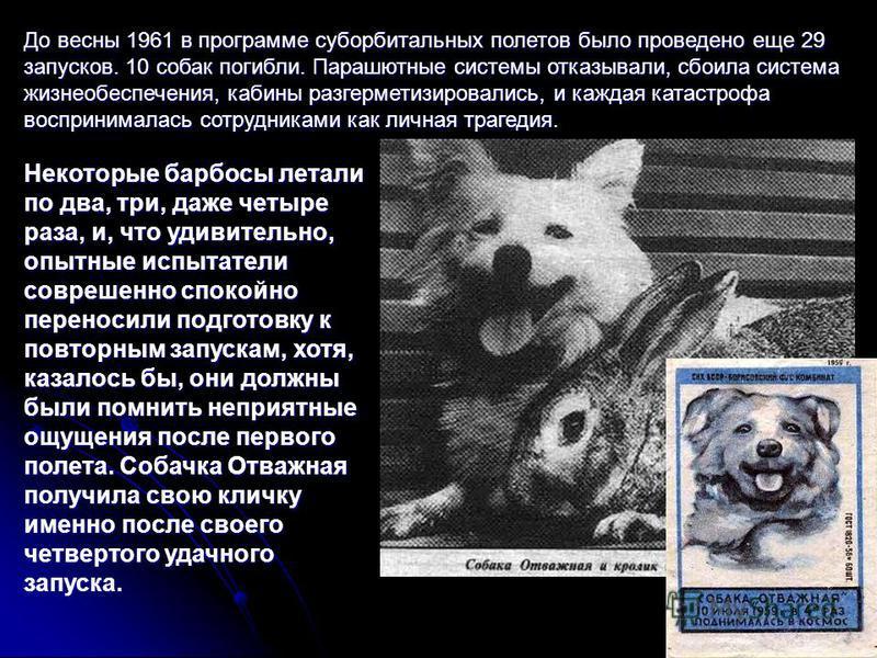 До весны 1961 в программе суборбитальных полетов было проведено еще 29 запусков. 10 собак погибли. Парашютные системы отказывали, сбоила система жизнеобеспечения, кабины разгерметизировались, и каждая катастрофа воспринималась сотрудниками как личная