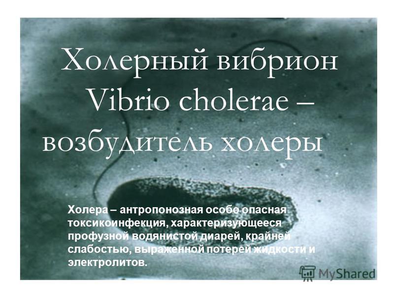 Холерный вибрион Vibrio cholerae – возбудитель холеры Холера – антропонозная особо опасная токсикоинфекция, характеризующееся профузной водянистой диарей, крайней слабостью, выраженной потерей жидкости и электролитов.