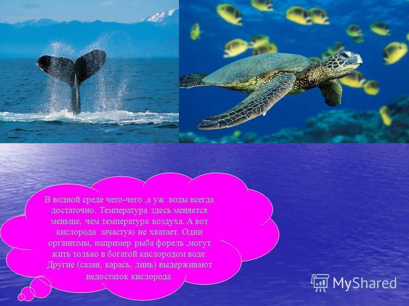 В водной среде чего-чего,а уж воды всегда достаточно. Температура здесь меняется меньше, чем температура воздуха. А вот кислорода зачастую не хватает. Одни организмы, например рыба форель,могут жить только в богатой кислородом воде. Другие (сазан, ка