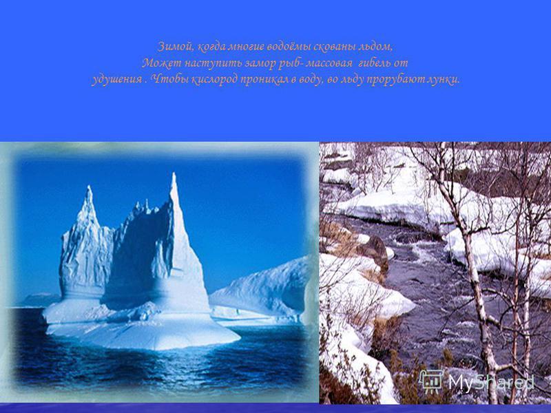 Зимой, когда многие водоёмы скованы льдом, Может наступить замор рыб- массовая гибель от удушения. Чтобы кислород проникал в воду, во льду прорубают лунки.