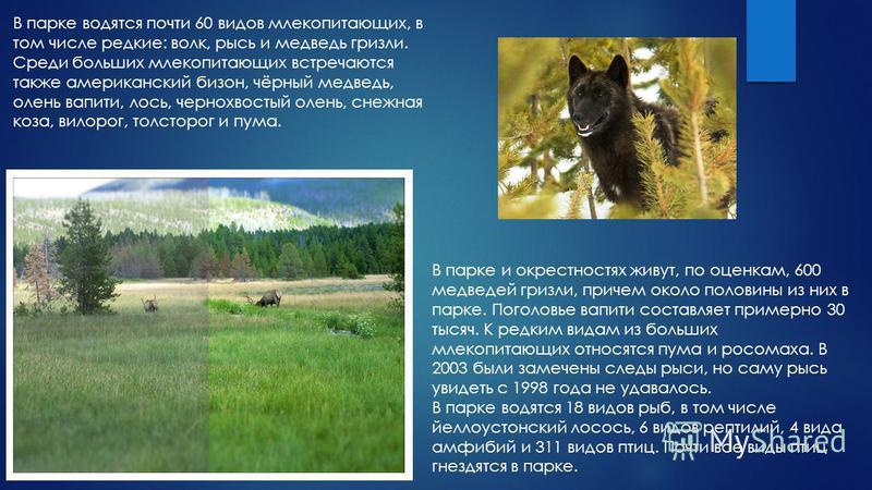 В парке водятся почти 60 видов млекопитающих, в том числе редкие: волк, рысь и медведь гризли. Среди больших млекопитающих встречаются также американский бизон, чёрный медведь, олень вапити, лось, чернохвостый олень, снежная коза, вилорог, толсторог