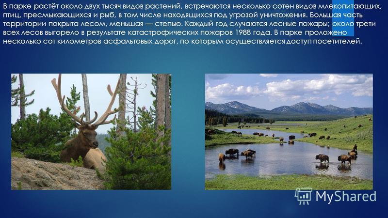 В парке растёт около двух тысяч видов растений, встречаются несколько сотен видов млекопитающих, птиц, пресмыкающихся и рыб, в том числе находящихся под угрозой уничтожения. Большая часть территории покрыта лесом, меньшая степью. Каждый год случаются