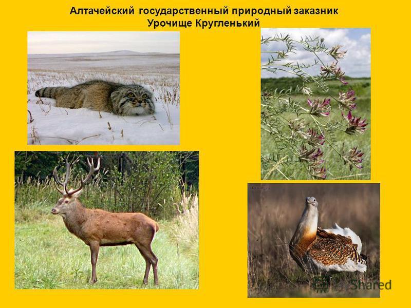 Алтачейский государственный природный заказник Урочище Кругленький