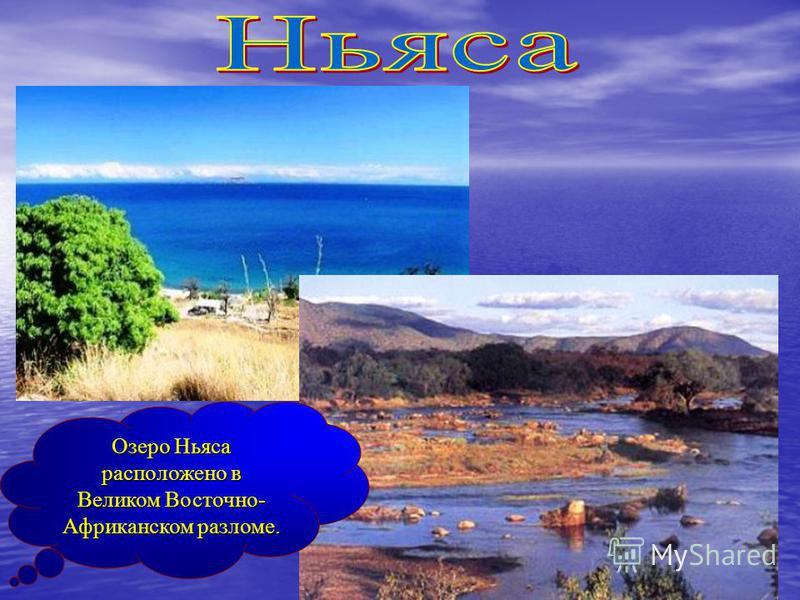 Озеро Ньяса расположено в Великом Восточно- Африканском разломе.