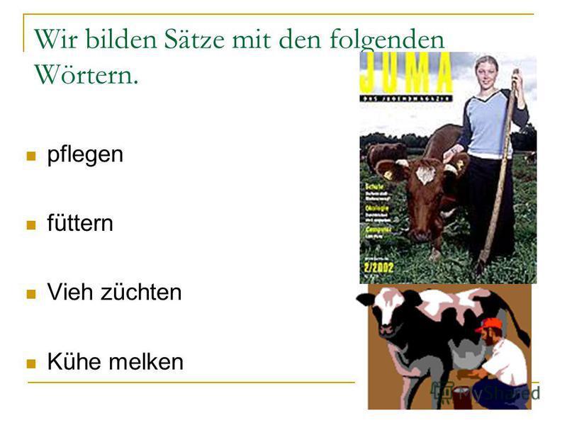 Wir bilden Sätze mit den folgenden Wörtern. pflegen füttern Vieh züchten Kühe melken