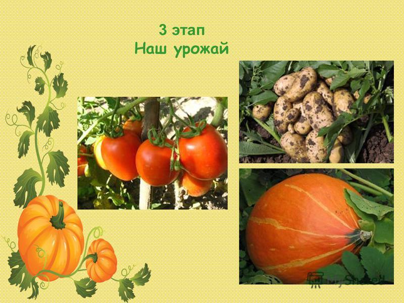 3 этап Наш урожай