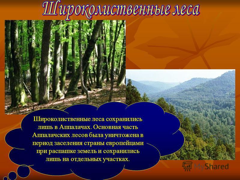 Широколиственные леса сохранились лишь в Аппалачах. Основная часть Аппалачских лесов была уничтожена в период заселения страны европейцами при распашке земель и сохранились лишь на отдельных участках.
