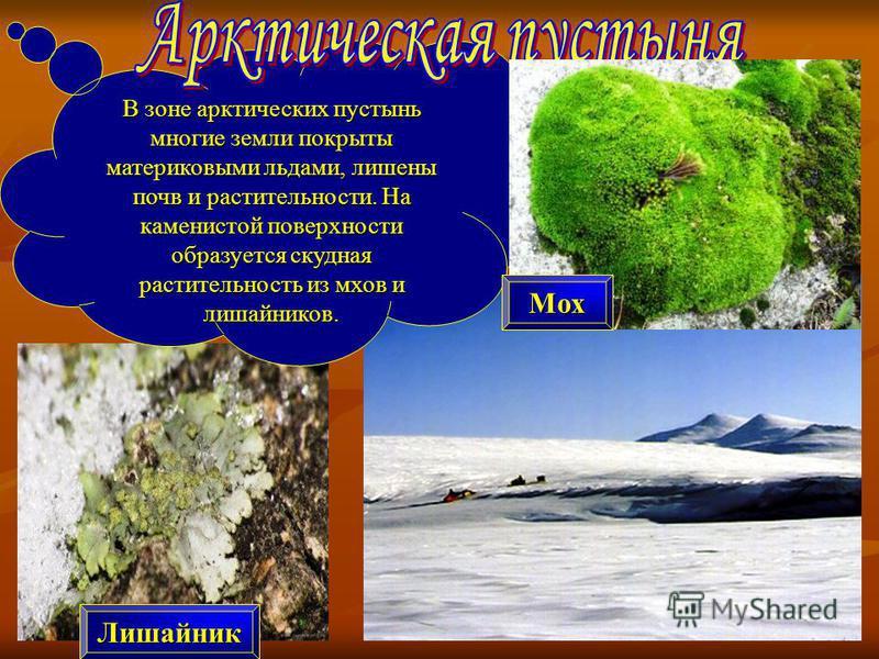В зоне арктических пустынь многие земли покрыты материковыми льдами, лишены почв и растительности. На каменистой поверхности образуется скудная растительность из мхов и лишайников. Лишайник Мох