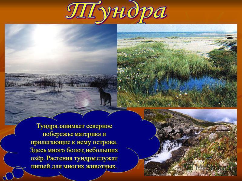 Тундра занимает северное побережье материка и прилегающие к нему острова. Здесь много болот, небольших озёр. Растения тундры служат пищей для многих животных.