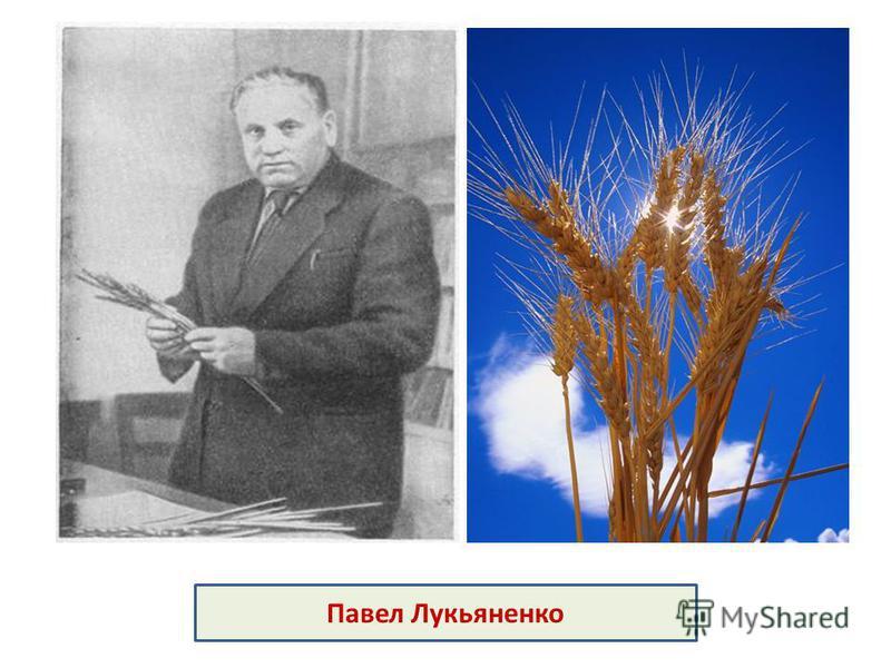 Павел Лукьяненко