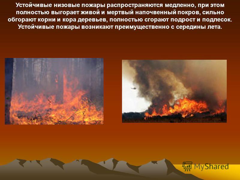 Устойчивые низовые пожары распространяются медленно, при этом полностью выгорает живой и мертвый напочвенный покров, сильно обгорают корни и кора деревьев, полностью сгорают подрост и подлесок. Устойчивые пожары возникают преимущественно с середины л