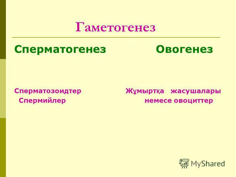 Гаметогенез Сперматогенез Овогенез Сперматозоидтер Ж ұ мырт қ а жасушалары Спермийлер немесе овоциттер